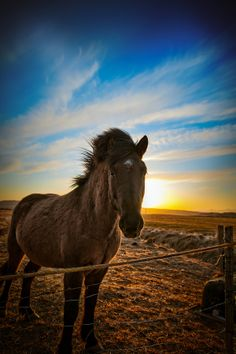 Icelandic Pony by Alan Carter on 500px