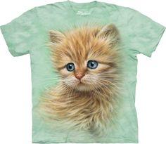 Retrato de un gatito. #3468