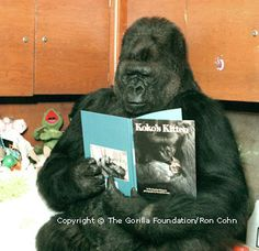 Any animal who can read is my hero (maybe someday they'll read my book!!).  This is Koko, a hero gorilla, who also knows how to speak sign language!