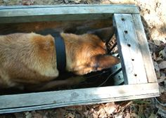 http://2.bp.blogspot.com/_QcWcYUNi3mY/TAXRo0aXFFI/AAAAAAAABrc/ff9mU3qJ2hA/s1600/5-29-10+earthdog.JPG