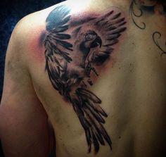 Papagei Tattoo am Schulterblatt