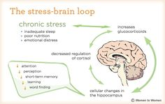 Stress can change the size of your brain (and make it smaller). 10 surprising facts about how our brains work. Trauma, Ptsd, Brain Size, Effects Of Stress, Train Your Brain, Chronic Stress, Adrenal Fatigue, Cortisol, Willpower