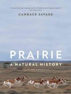 Prairie : a natural history by Candace Savage ---- The natural and environmental history of the Great Plains. (March)