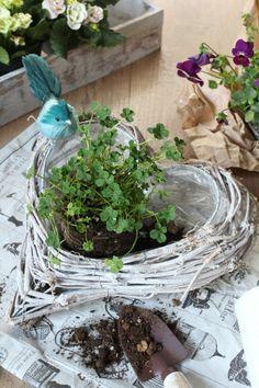 Afhankelijk van de grootte van de mand, en toen het was groot en het is elke pot, Het is goed om direct ook te planten, of vermindering van de bodem een beetje.