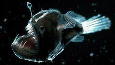 poisson-abysses