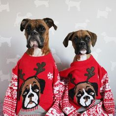 These Boxers have some of the best Christmas Sweaters we have ever seen! www.bullymake.com via: @rubytheboxerdog