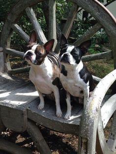 Maddie and Sadie