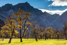 Old Sycamore Maple (Acer pseudoplatanus) Trees and Karwendel Range Grosser Ahornboden Alpine... by Radius_Images via http://ift.tt/2gRiaUG