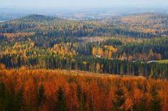 Image detail for -Autumn Landscape From Väisälänmäki, Finland Royalty Free Stock ...