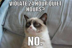 Grumpy cat likes no