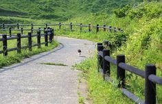 올레 길 걷는 길 고양이, 올레 길 고양이 (규슈올레 무나카타 오오시마 코스) :: 도쿄 동경 베쯔니 블로그