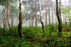 latvian-forest-mural
