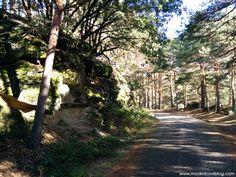 Setas en la Sierra de Guadarrama de Madrid. Hacer una ruta de senderismo por la Sierra de Guadarrama es un plan perfecto para el fin de semana si el tiempo lo permite, y si además es época de setas, ¡puede que hasta haya premio!