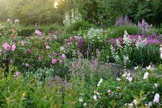 "3,475 Synes godt om, 21 kommentarer – Claus Dalby (@clausdalby) på Instagram: ""Do you follow @denengelskatradgarden? A great great garden in the south of Sweden. #clausdalby…"""