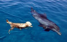 5 Unusual Dog Friendships with Other Animals   DogVacay Official Blog