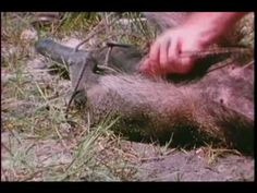 Dangerous Moments in the Wild Kingdom - YouTube