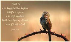 Zsoltárok 13,6