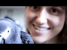 Congo and Timneh African Grey Parrots Timneh African Grey, African Grey Parrot, Pretty Birds, Parrots, Congo, Happy, Nature, Youtube, Animals