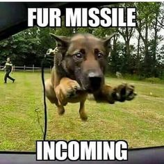 Fur Missile Incoming!