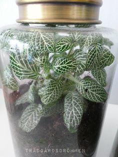 slutet sytem 1 Terrarium Plants, Small World, Love Flowers, Houseplants, Organic Gardening, Mason Jars, Diy And Crafts, Presents, Crafty