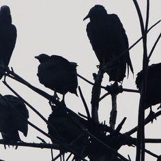 birds, black, and dark image The Raven, Necromancer, Paladin, Gwendolyn Shepherd, Elf Rogue, Half Elf, Arte Dark Souls, The Wicked The Divine, Jonathan Crane