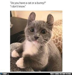Do you have a cat or a bunny? I don't know! (Funny Animal Pictures) - #bunny #cat #ears