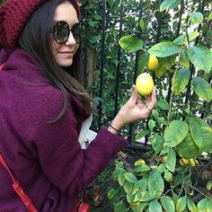 The salad secret - we don't buy lemons; we get them from the tree in the garden