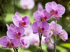 Bildergebnis für orchideen bilder