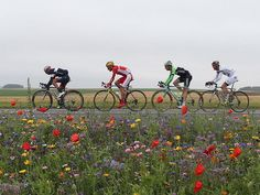 Tour de France 2014 Stage Six -poppies and cornflowers in northern France.