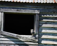 Photo of rarely seen little owl delights | Otago Daily Times Online News