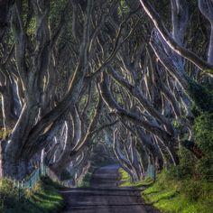 アイルランドの北東、アントリム州に存在する、「ダーク・ヘッジズ」というブナの樹のトンネル。樹齢は300年。18世紀のスチュアート王朝によって植えられた。