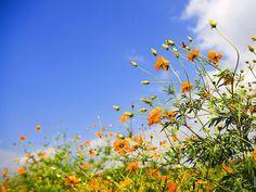 Amazing Cvijeće i nebo Wallpaper HD Pozadine Check more at http://pozadine.info/proljece/cvijece-i-nebo/