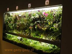 52 Best Awesome Reptile Terrariums Amp Vivariums Images