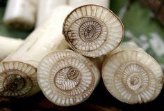 sugarcane / natural patterns in nature / TheArtfulGardener