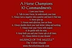 Musings of the Muzzle #thevelvetmuzzle #musingsofthemuzzle #horsesayings #lovehorses #werockurhorse www.thevelvetmuzzle.com