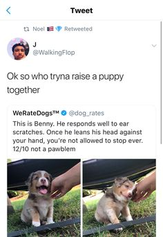 I wanna raise a puppy so bad, but I'm still not sure when to adopt. I think I haven't recovered yet from the loss of my dog 6 years ago. Cute Funny Animals, Cute Baby Animals, Funny Cute, Funny Dogs, Animals And Pets, Crazy Animals, Dog Memes, Funny Memes, Cute Puppies