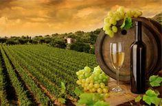 Ποτά Diabetes Food, Diabetes Facts, Cure Diabetes, Gestational Diabetes, Santa Ynez Valley, Wine Wallpaper, Raisin Blanc, Wine Making, Lunch Foods