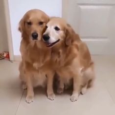 Cute Funny Dogs, Cute Cats And Dogs, Cute Dogs And Puppies, Cute Funny Animals, Cute Baby Animals, Animals And Pets, Doggies, Funny Animal Videos, Dog Pictures