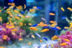 Aquarium with orange and blue fish Free Photo Malawi Cichlids, Guppy, Mundo Marketing, Shrimp Tank, Bowl Designs, Pet Store, Aquarium Fish, Pet Accessories, Fish Tank