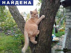 Найден кот г.Тольятти http://poiskzoo.ru/board/read31179.html  POISKZOO.RU/31179 На даче прибился к нам хорошенький котеночек. Уже там оставаться ему холодно, а домой мы его взять не можем. Это мальчик, месяцев пять ему. Кому хочется его забрать к себе обращайтесь.   РЕПОСТ! @POISKZOO2 #POISKZOO.RU #Найдена #кошка #Найдена_кошка #НайденаКошка #Тольятти