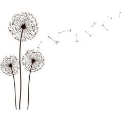 Dandelion pencil draw