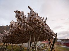 Traditional racks for the drying of cod (Gadus Morhua) in Lofoten, Norway Lofoten, Arctic, Cod, Norway, Salmon, Traditional, Photo And Video, Image, Cod Fish