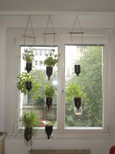 Hanging garden pots for indoors. The whole website is about ideas for recycling objects from around the house. Outdoor Life, Outdoor Gardens, Outdoor Living, Outdoor Decor, Herb Garden, Garden Pots, Organic Gardening Catalogue, Inside Plants, Blue Mason Jars