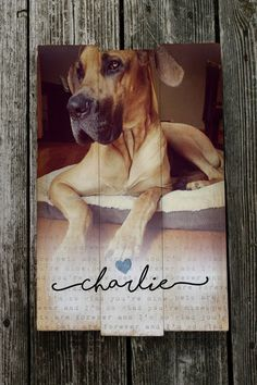 Reclaimed wood or Pine wood, now you can choose! We have both reclaimed wood or pine wood personalized photo pallets. Both are beautiful. Pet Loss Gifts, Dog Gifts, Gifts For Pet Lovers, Dog Lovers, Dog Memorial, Pet Memorial Gifts, Memorial Ideas, Pet Remembrance, Pet Memorials