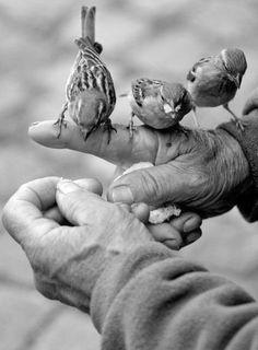 Gentle nurturing hands