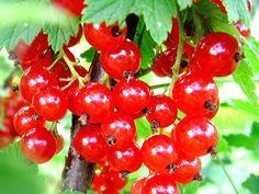 pessegos fruta - Pesquisa Google