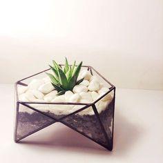 Флорариум Трёхножный с хавортией #флорариум #террариум #суккуленты #V2florarium #флорариумспб #Тиффани #ручнаяработа #terrarium #succulent #Tiffany #handmade