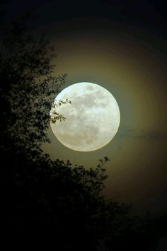 © are the true spirits that go into our moonshine.That's why the stills are way outback, in the woods, amoung the trees.Come see us when that big 'ol moon is fat and round, bring a cup, a song and a warm heart.See ya real soon. Moon Beauty, Image Nature, Luna Moon, Moon Dance, Shoot The Moon, Moon Photos, Full Moon Pictures, Moon Shadow, Good Night Moon