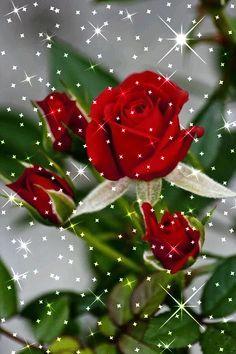 48218468 Pin de Татьяна О em Красивые розы Beautiful Flowers Wallpapers, Beautiful Rose Flowers, Beautiful Nature Wallpaper, Love Flowers, Rose Flower Wallpaper, Flowers Gif, Beautiful Love Pictures, Beautiful Gif, Happy Birthday Flower