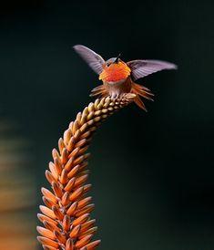 Beautiful hummingbird close-up